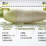 """[ครัวแม่บ้านญี่ปุ่น] นานาสาระจาก """"หัวไชเท้า"""" เป็นได้มากกว่าส่วนประกอบในซุปหรือน้ำจิ้มเทมปุระ"""